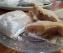 Pasteles de Compota de Manzana